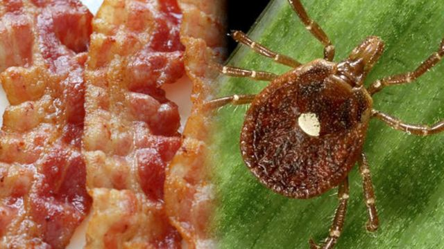 News video: This Tick Can Make You Allergic to Meat!